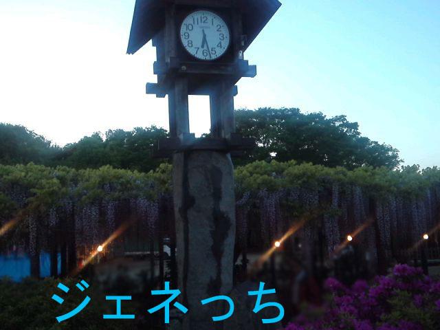 藤まつり2013②