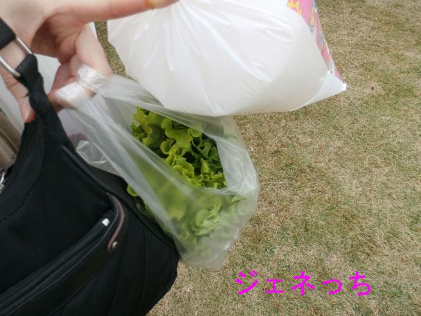 銀杏祭2014で野菜とわたがし