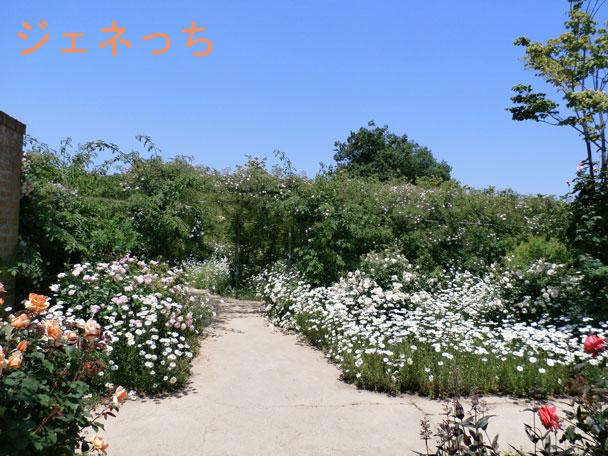 お花に囲まれた小路