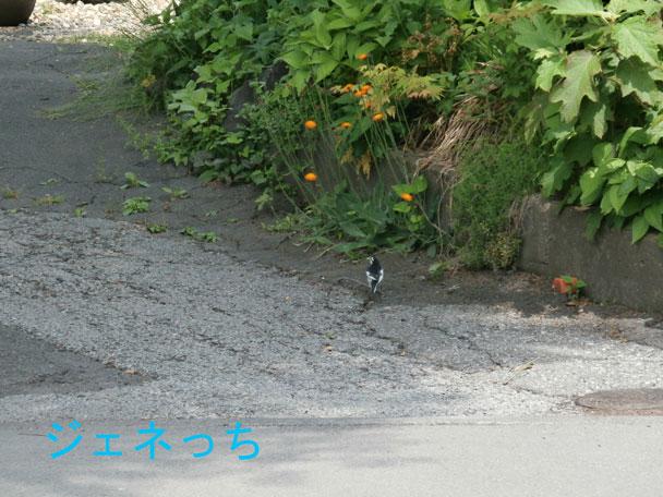 軽井沢で見かけた小鳥