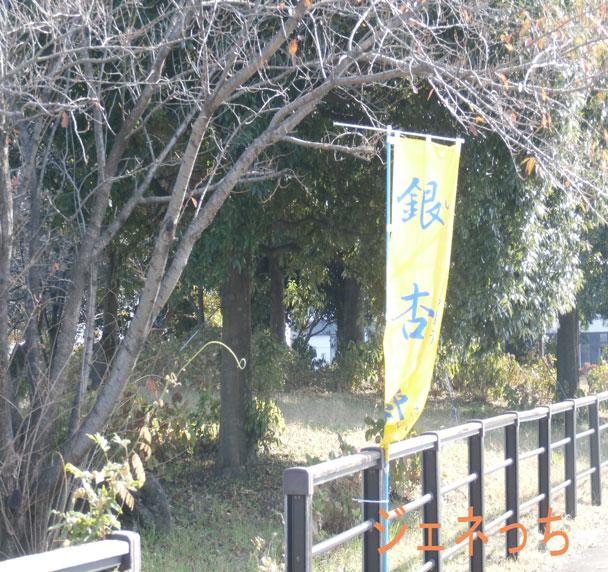 銀杏祭2015のぼり