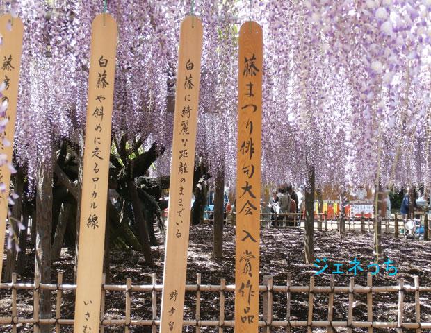 2016藤まつり俳句大会