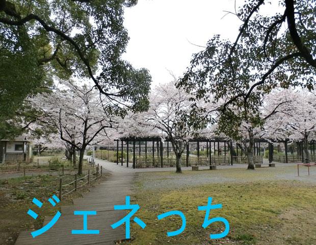 玉敷公園桜2016