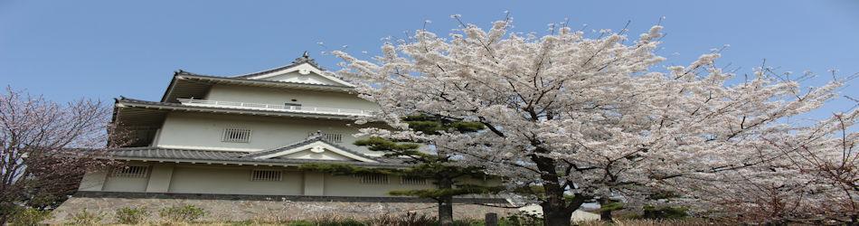 騎西城の桜